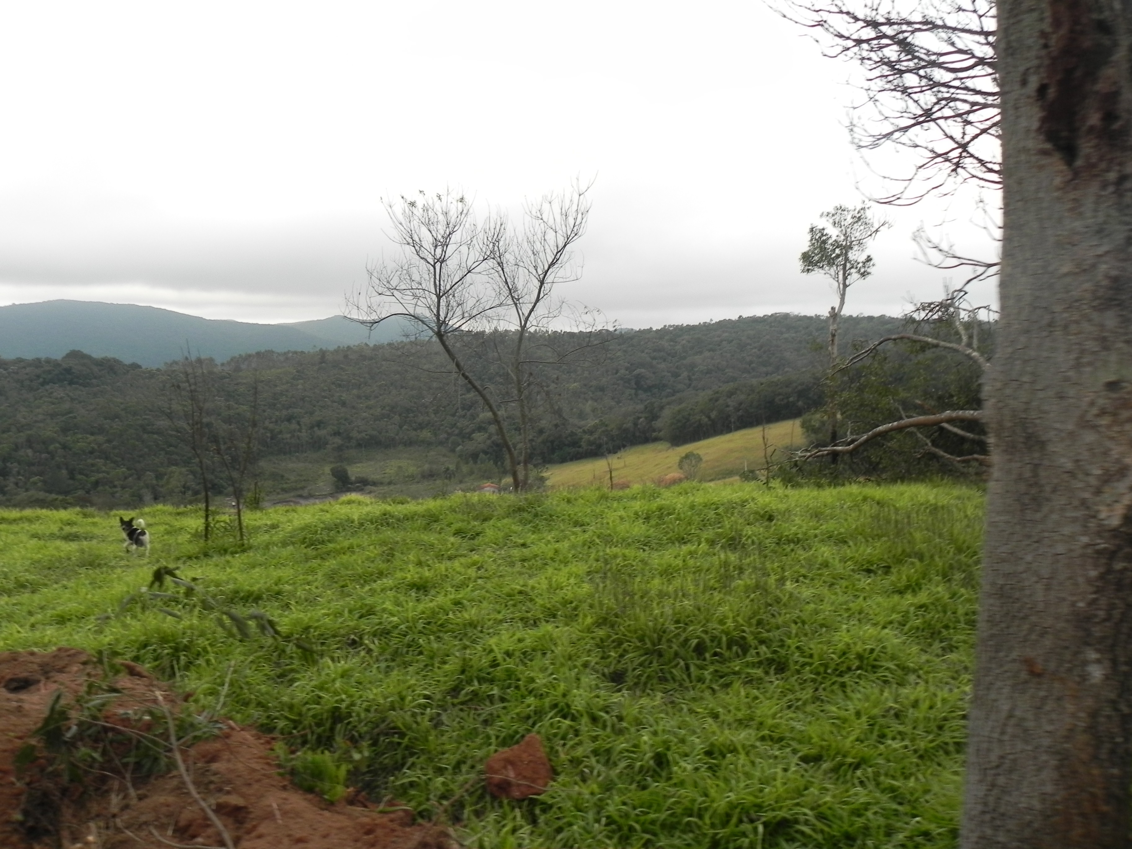 (K.A) venha conferir otimos terrenos em Mairiporã