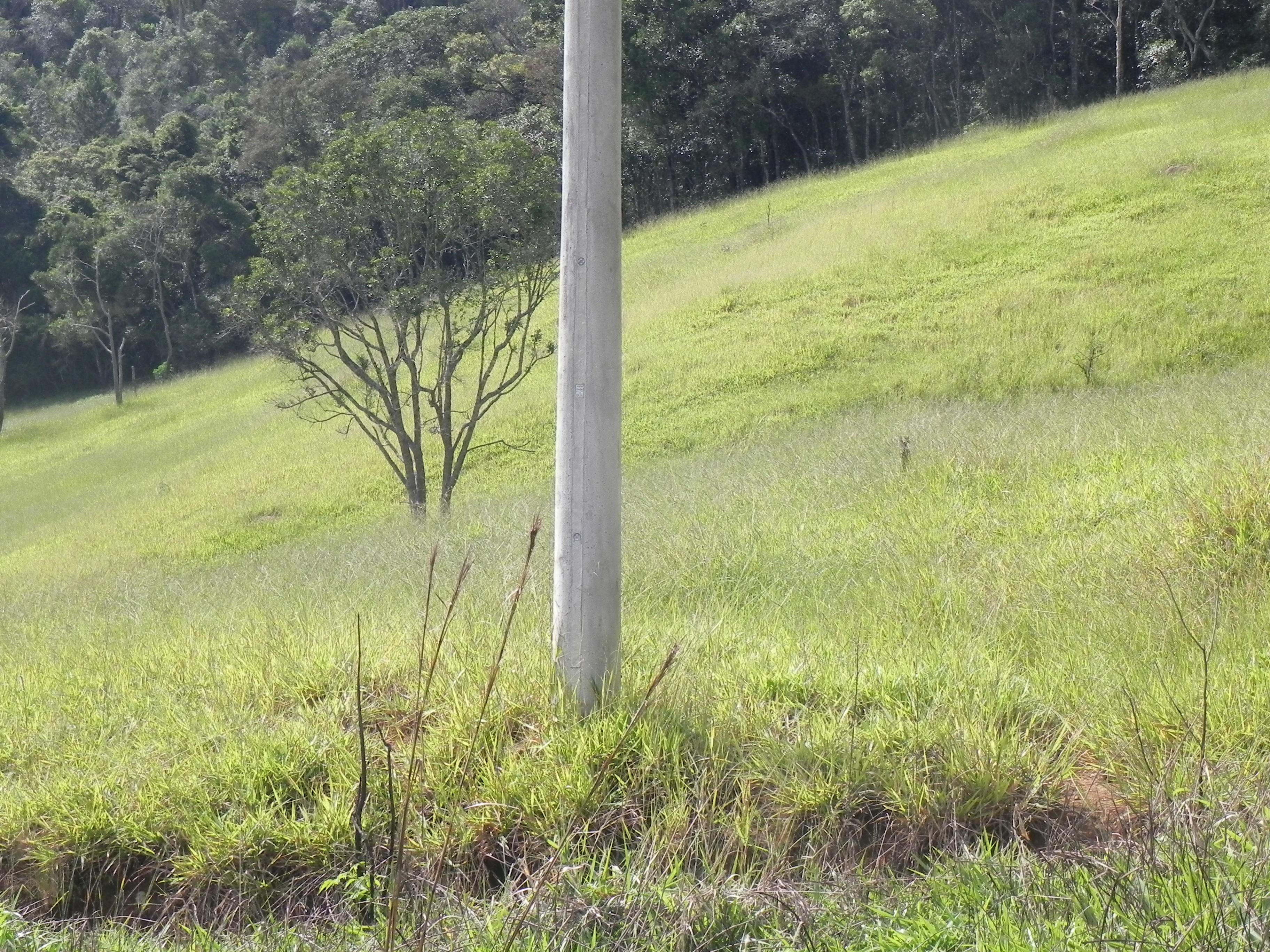 (K.A) localizados em Mairiporã SP direto com o proprietário