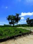 (K.A) Guararema região rica em áreas verdes