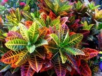 Em Canto´s Plantas: nativas,frutíferas,ornamentais e paisagismo!!!