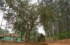 Fazenda à venda Vale do Paraíba SP